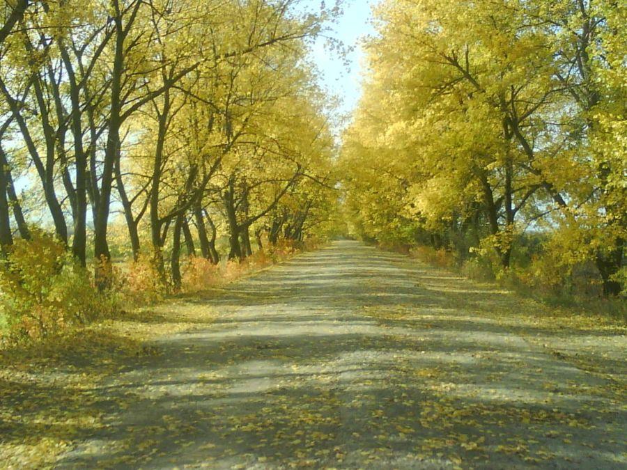 Прогноз погоди на 10 днів село Олексіївка